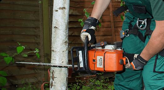 Cutting a tree professionally
