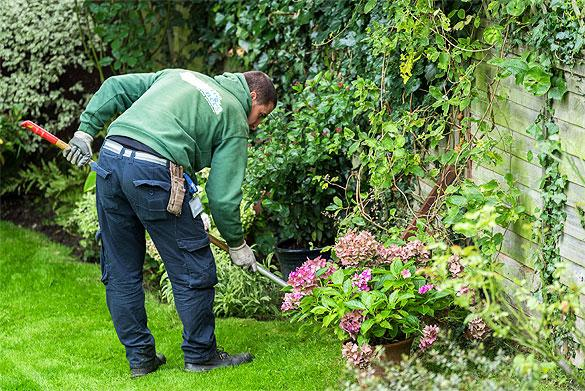 Fantastic services keep a garden intact with pro garden for Basic garden maintenance