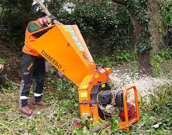 Gardener shredding a tree brunch