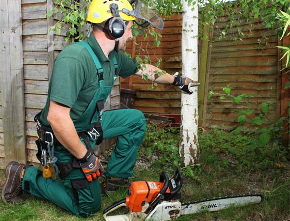 Fantastic expert inspecting a tree