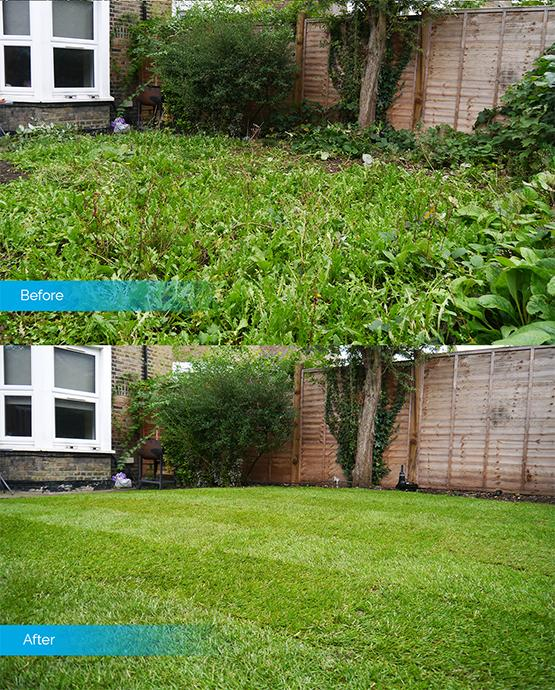 Before & After image of a garden
